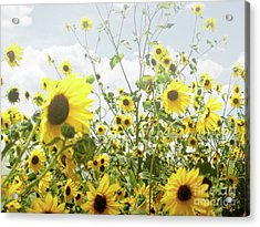 Acrylic Print featuring the photograph New Mexico Sunflowers by Andrea Hazel Ihlefeld