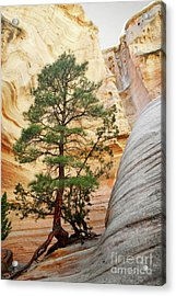 New Mexico Tent Rocks Slot Canyon Tree Landscape Acrylic Print by Andrea Hazel Ihlefeld