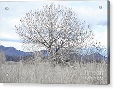 Acrylic Print featuring the photograph New Mexico Tree Mountain Landscape by Andrea Hazel Ihlefeld