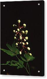 New Plant - 2 Acrylic Print by Randy Muir