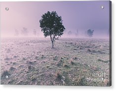 New South Wales Foggy Meadow Acrylic Print