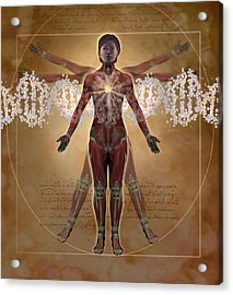 New Vitruvian Woman Acrylic Print by Jim Dowdalls and Photo Researchers