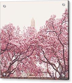 New York City - Springtime Cherry Blossoms Central Park Acrylic Print by Vivienne Gucwa