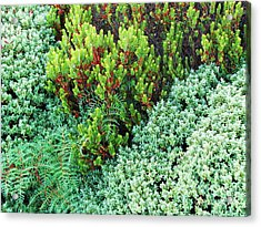 Acrylic Print featuring the photograph New Zealand Flora by Michele Penner