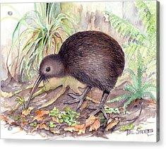 New Zealand Kiwi Acrylic Print by Val Stokes