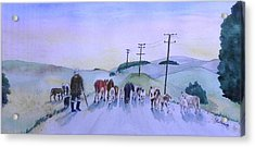 New Zealand Traffic Jam Acrylic Print by Christine Lathrop