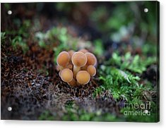 Newborn Mushroom Close-up Acrylic Print