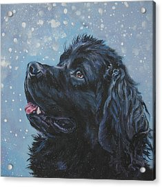 Newfoundland In Snow Acrylic Print