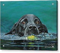 Next Time You Fetch It  Acrylic Print by Bob Williams
