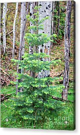 Next Years Christmas Tree Acrylic Print by Donna Greene