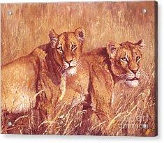 Ngorongoro Lionesses Acrylic Print by Silvia  Duran