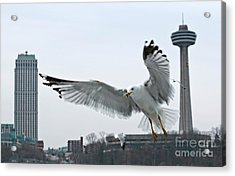 Acrylic Print featuring the photograph Niagara Falls With Gulls by Charline Xia
