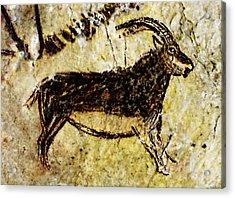 Niaux Goat Acrylic Print