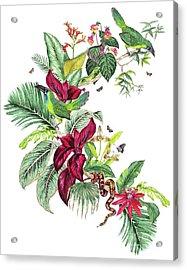 Nicaragua Placement Acrylic Print