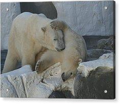 Nice Bear Acrylic Print