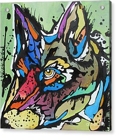 Nico The Coyote Acrylic Print