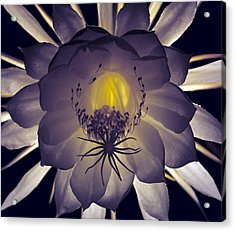 Night Angel Acrylic Print by Kurt Shaffer