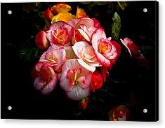 Night Begonias Three Acrylic Print by John Ater