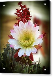 Acrylic Print featuring the photograph Night-blooming Cereus 2 by Marilyn Smith