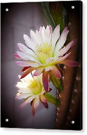 Acrylic Print featuring the photograph Night Blooming Cereus by Marilyn Smith