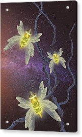 Night Butterflies Acrylic Print