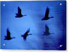 Night Flight Acrylic Print