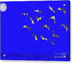 Night Flight Acrylic Print by Kathie Chicoine