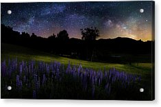 Acrylic Print featuring the photograph Night Flowers by Bill Wakeley