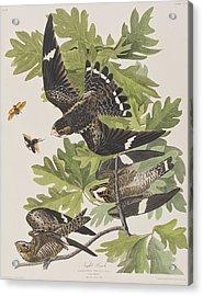 Night Hawk Acrylic Print