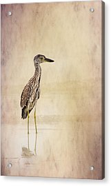Night Heron 3 By Darrell Hutto Acrylic Print by J Darrell Hutto
