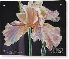 Acrylic Print featuring the pastel Night Iris by Terri Thompson