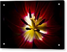 Night Lily Two Acrylic Print by John Ater