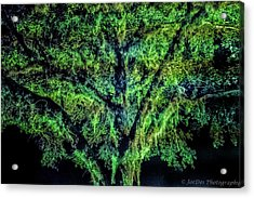 Night Moss Acrylic Print