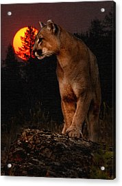 Night Of The Cougar Acrylic Print