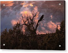 Night Of The Raven Acrylic Print