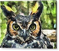 Night Owl Acrylic Print by Trish Tritz