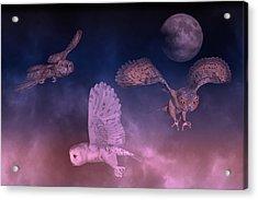 Night Owls Acrylic Print by Betsy Knapp
