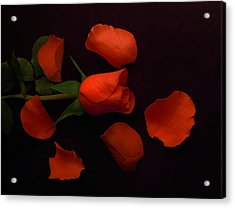 Night Rose 2 Acrylic Print
