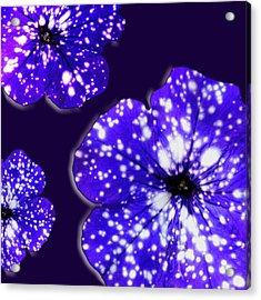 Night Sky Petunias Acrylic Print by Tara Hutton