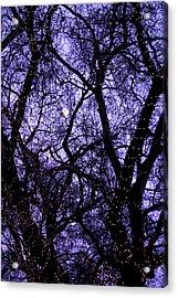 Night Tree Acrylic Print by Jez C Self