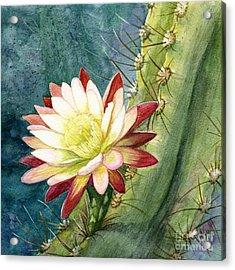 Nightblooming Cereus Cactus Acrylic Print