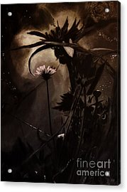 Nightflower Acrylic Print by Vanessa Palomino