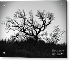 Nightmare Tree Acrylic Print