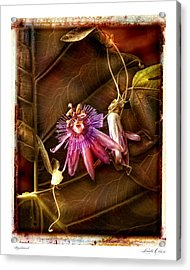 Nightshade Acrylic Print by Linda Olsen