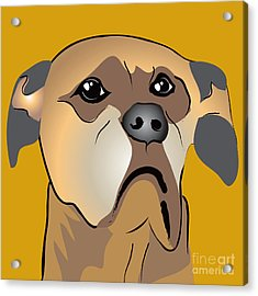 Niki Boxer Dog Portrait Acrylic Print by Robyn Saunders