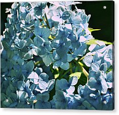 Nikko Blues Acrylic Print by JAMART Photography