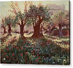 Nimrods Castle, Northern Galilee, Israel Acrylic Print