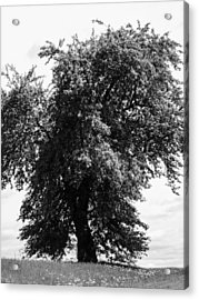 Nina Tree Dressed Out Bw Acrylic Print