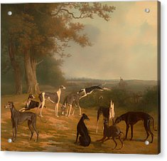 Nine Greyhounds In A Landscape Acrylic Print