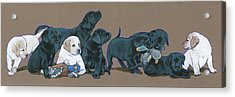 Nine Lab Puppies Acrylic Print